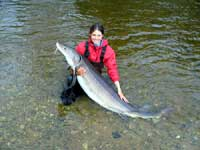 Christin Davis, MSU -  2005 Sturgeon Tagging.