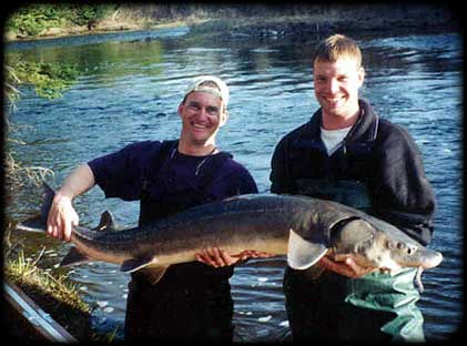 Sturgeon Research