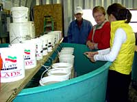 Gail & Dock Hatchery:  Hatchery visitors-larval sturgeon in buckets.