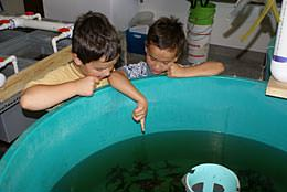 Hatchery Tours